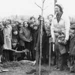 Mrs Grace Davison plants a tree for Osborne WI in 1974